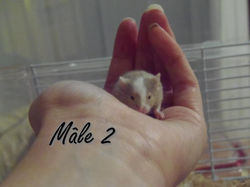 Des bébés souris pour compagnie ? Myle_211