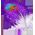 Habitat à colibri => Plume de Colibri Costah10