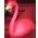 Habitat Flamant Rose => Plume de Flamant Rose Flamin12