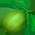 Limettier  Lime10