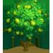 Vous cherchez un arbre ? Venez cliquer ici !!! Limetr10
