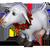 Chèvre Blanche / Super chèvre / Chèvre Valentine / Chèvre de Noël / Chèvre d'Halloween / Chèvre Italienne / Chevragon => Lait de Chèvre Lovego10