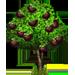 Vous cherchez un arbre ? Venez cliquer ici !!! Mangos13