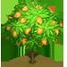 Vous cherchez un arbre ? Venez cliquer ici !!! Mangot11