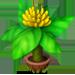 Bananier Nain Miniba11
