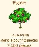 Le Figuier Sans_353