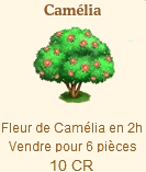 Camélia Sans_699