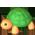Habitat Tortues Amoureuses => Imprimé Tortue Turtle10