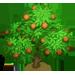 Vous cherchez un arbre ? Venez cliquer ici !!! Walnut15