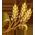 Mouton Mérinos => Mouton Wheat_10