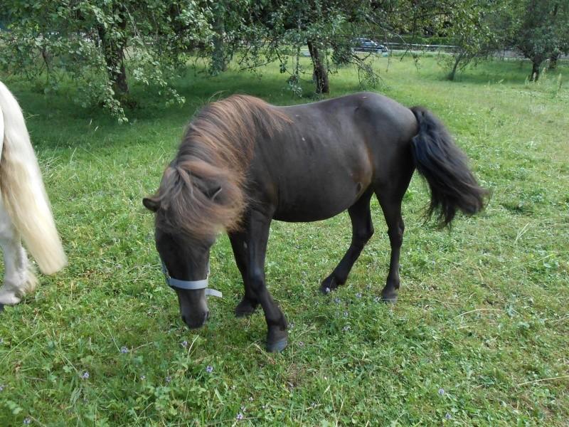REGLISSE - ONC poney typée Shetland née en 2000 - adoptée en novembre 2013 par Solenn - Page 2 02110