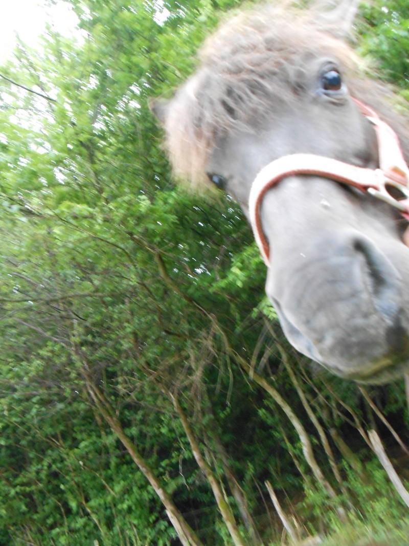 REGLISSE - ONC poney typée Shetland née en 2000 - adoptée en novembre 2013 par Solenn - Page 2 Baggue14