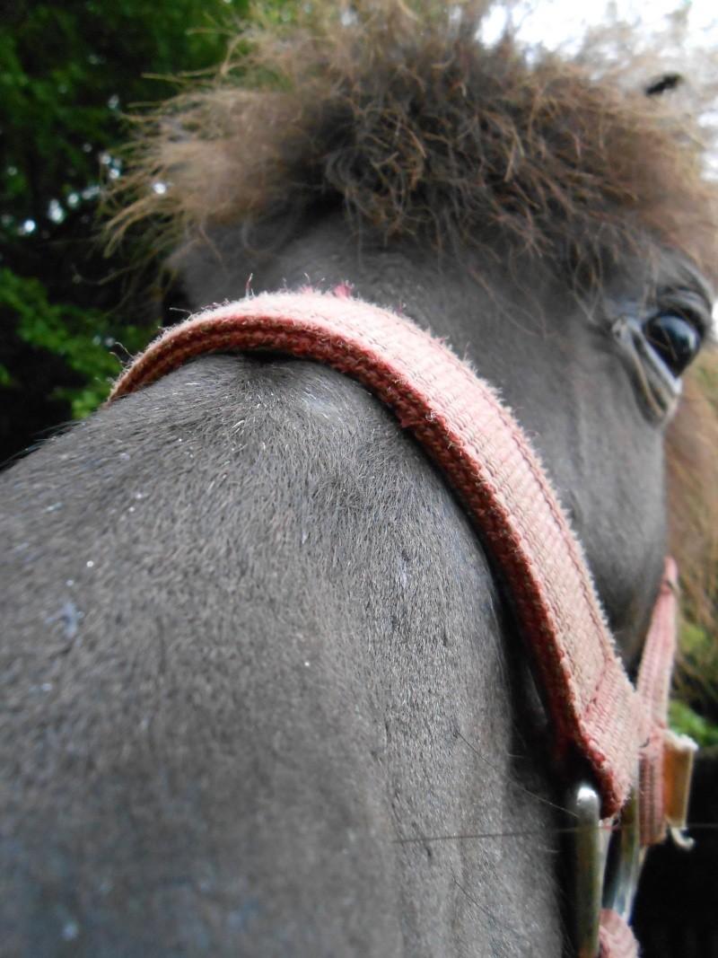 REGLISSE - ONC poney typée Shetland née en 2000 - adoptée en novembre 2013 par Solenn - Page 2 Baggue15