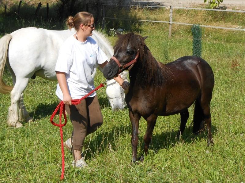 REGLISSE - ONC poney typée Shetland née en 2000 - adoptée en novembre 2013 par Solenn - Page 2 Dscn0014