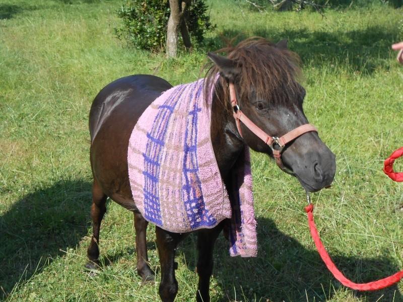 REGLISSE - ONC poney typée Shetland née en 2000 - adoptée en novembre 2013 par Solenn - Page 2 Dscn0016