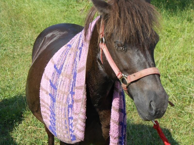 REGLISSE - ONC poney typée Shetland née en 2000 - adoptée en novembre 2013 par Solenn - Page 2 Dscn0017