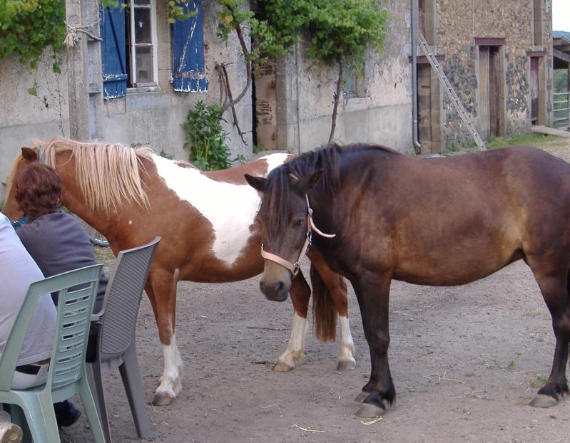 PRUNELLE - ONC poney typée shetland présumée née en 2000 - adoptée en août 2013 par Céline Prunel10