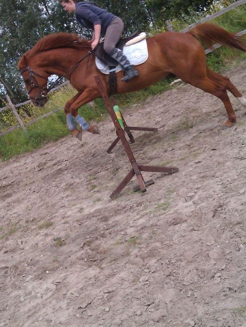 Photos de vos chevaux [ plus de 50 cm ♪ ] Imag0610