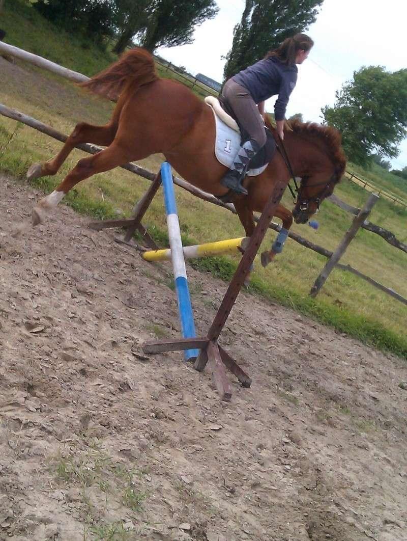 Photos de vos chevaux [ plus de 50 cm ♪ ] Imag0611