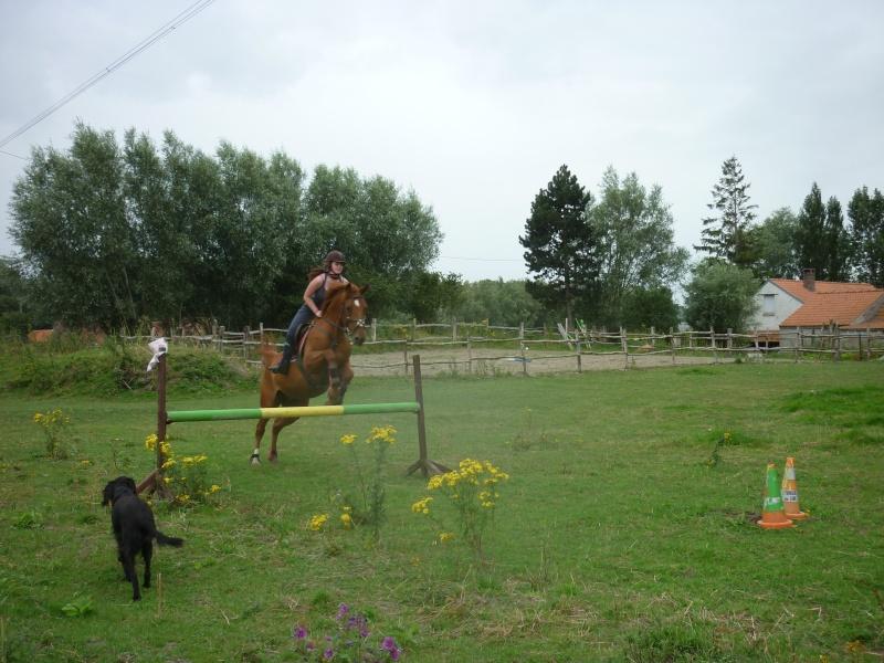 Photos de vos chevaux [ plus de 50 cm ♪ ] P1030010