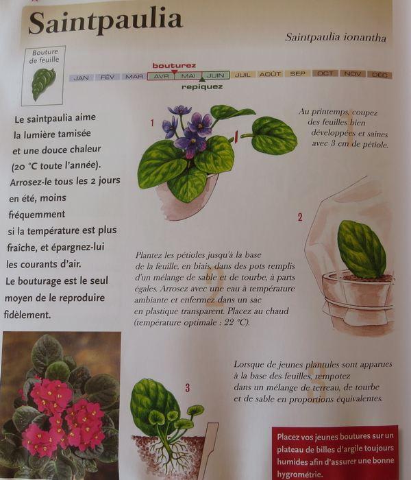 Saint-Paulia !!! - Page 2 Img_2317