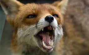 Little Bugger! Fox10