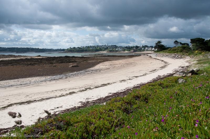 Sur l'île Callot  _dsc6411