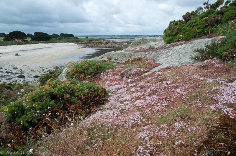 Sur l'île Callot  _dsc6513