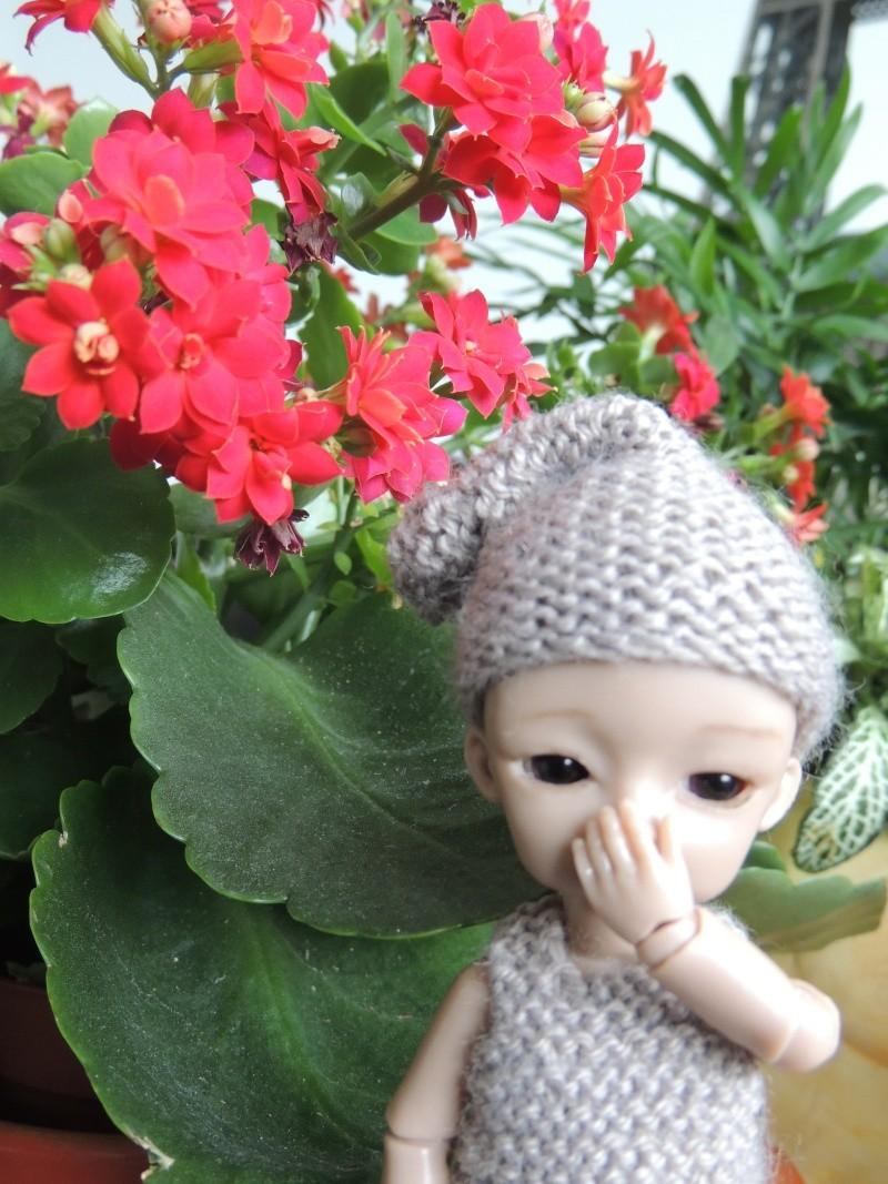 bébés hujoo et petites fairy : nouvelles photos - Page 2 Dscn2012