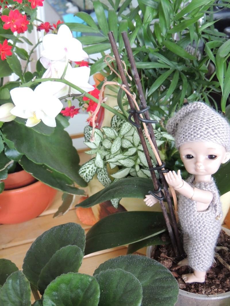 bébés hujoo et petites fairy : nouvelles photos - Page 2 Dscn2015
