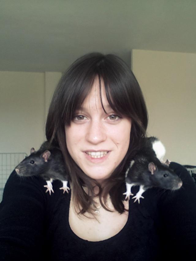 Sam, Dexter et Twitch, mes trois ratous  20140618