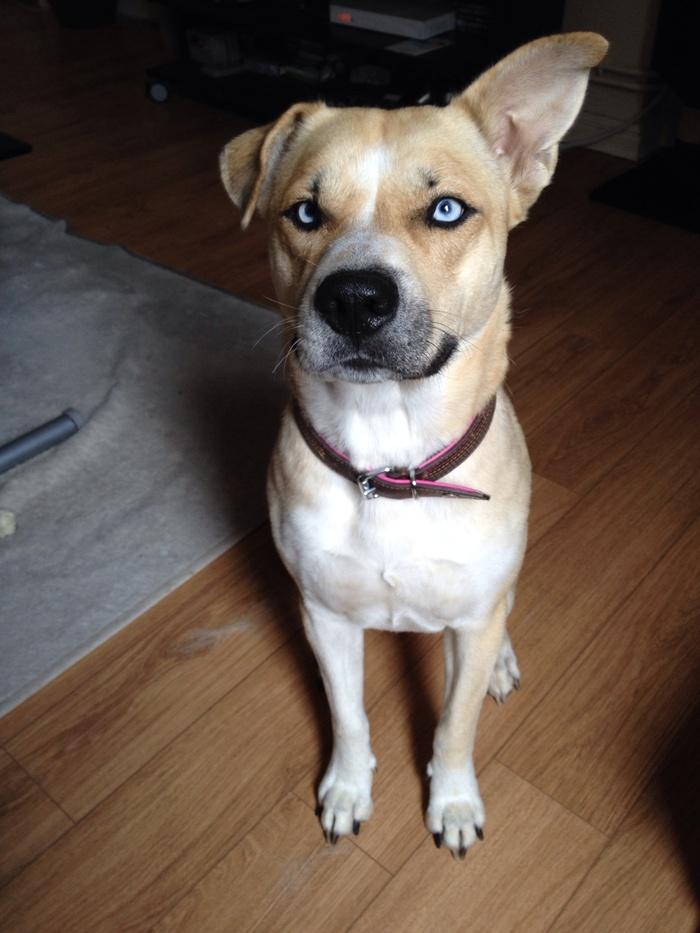 Y'a quoi dans ce chien? Sansa210