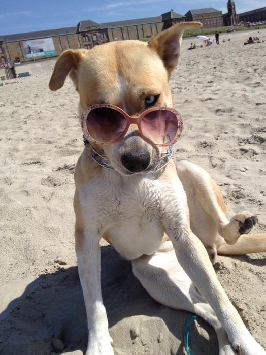 Y'a quoi dans ce chien? Sansa910