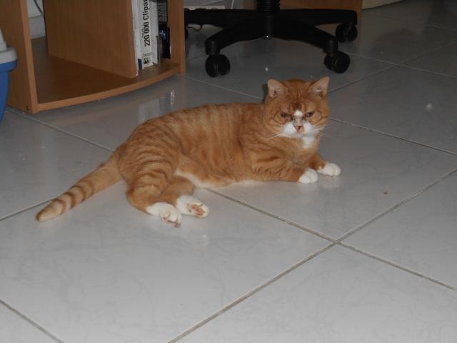 Garfield vers sa nouvelle fa Dscn0447