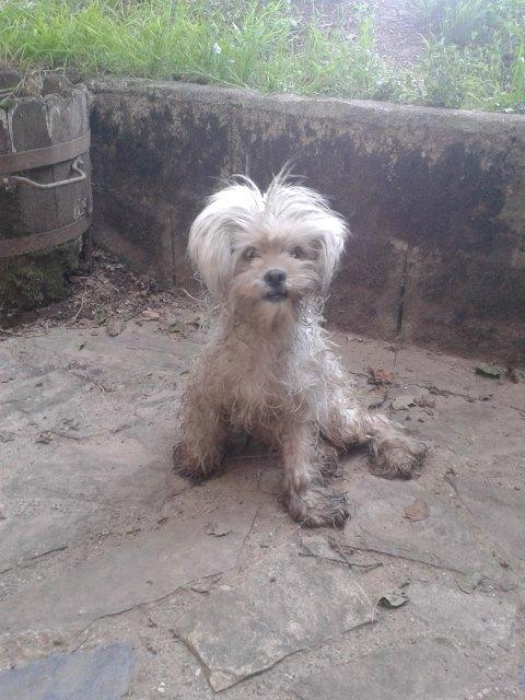 Petite chienne trouver au bord de la route 10513210