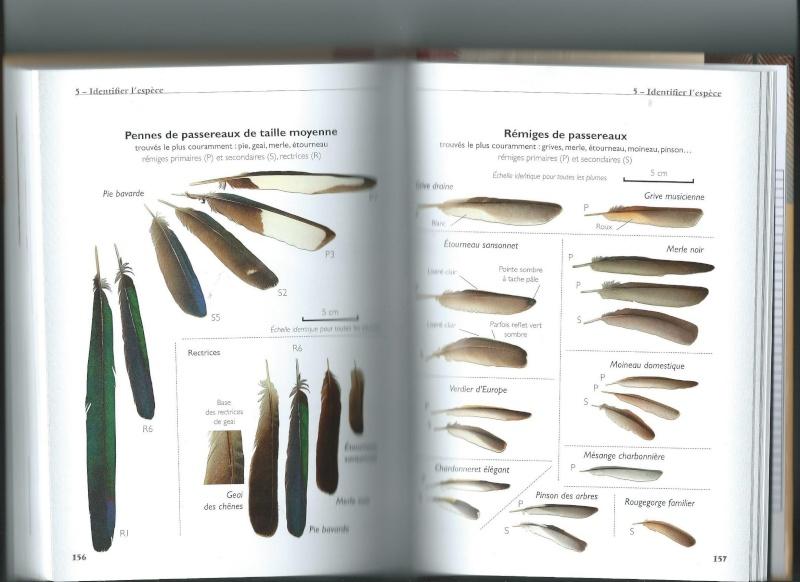 Les livres sur les plumes  Scan0041