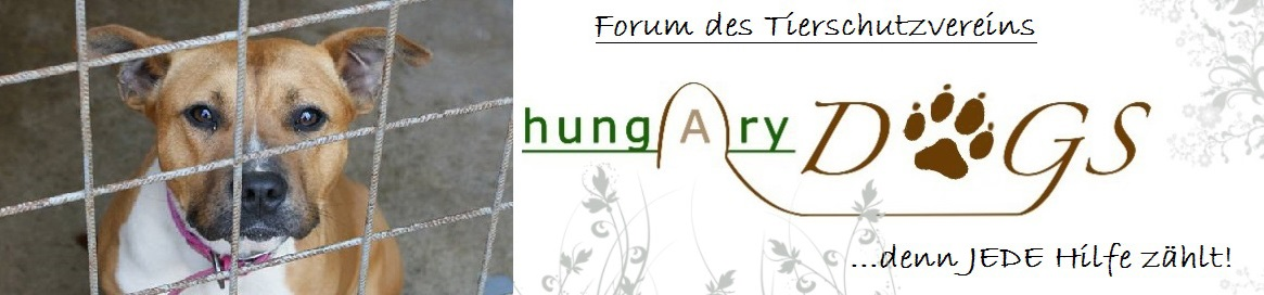 Hung(A)ry DOGS - Vereinsforum