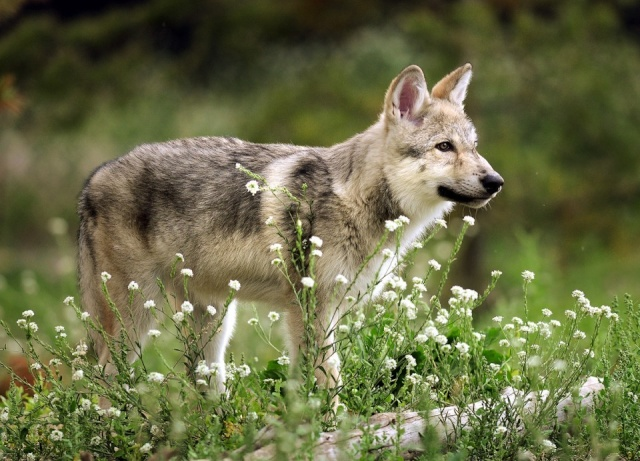 About: Wolf Development 4f73a510