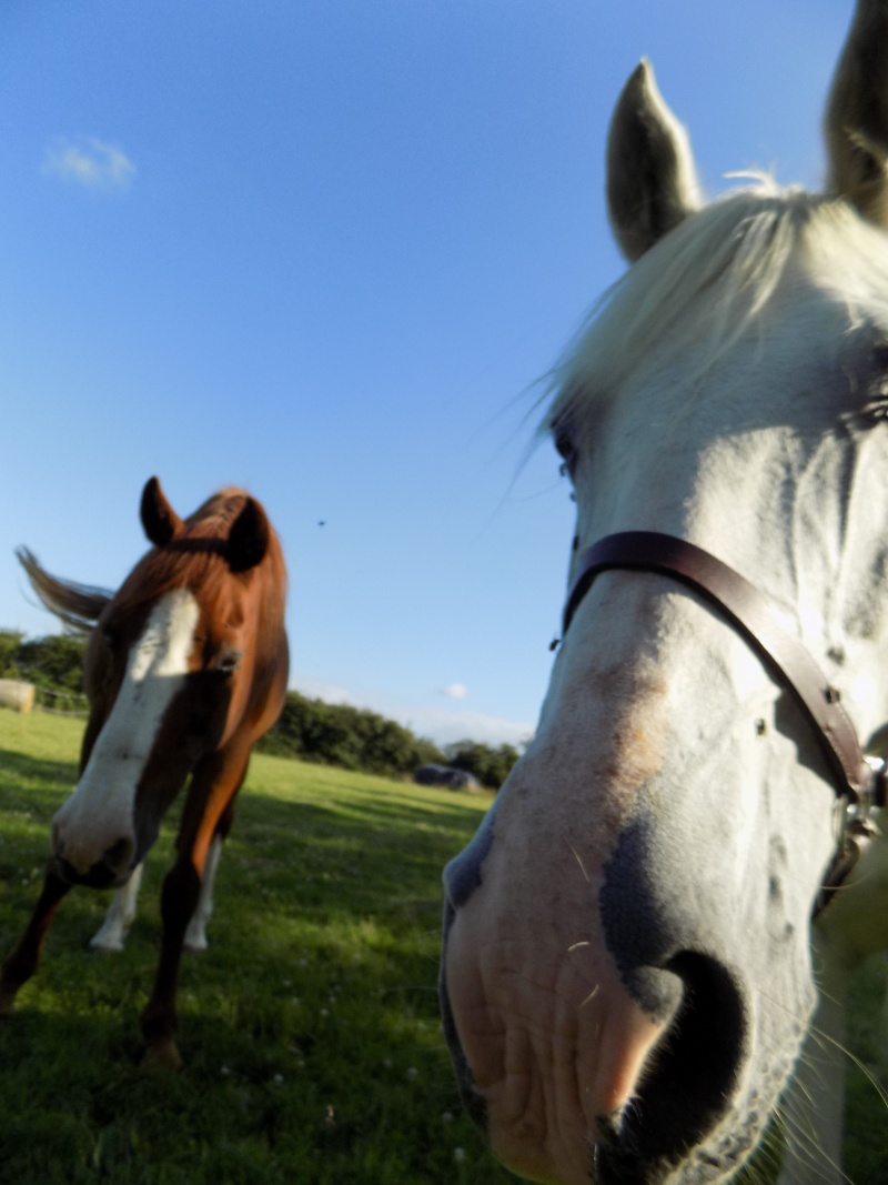 Rencontre entre deux chevaux..  Dscn0012