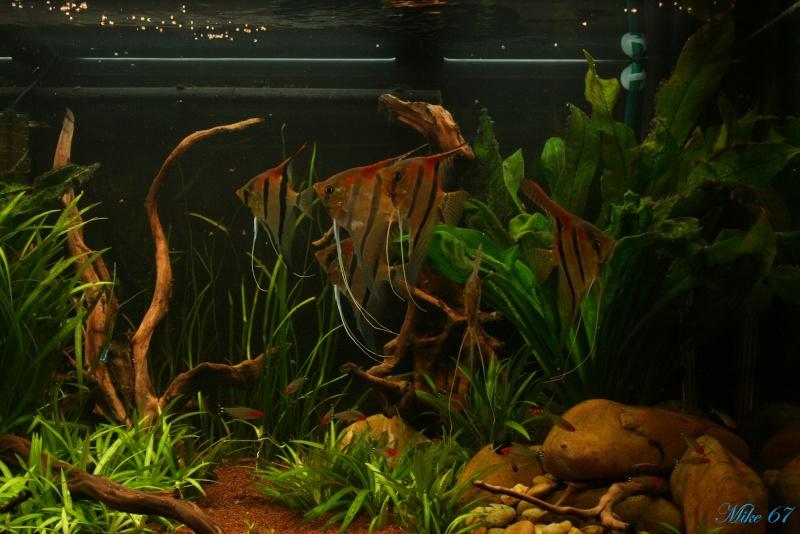 350 litres Amazonien (Rio manacapuru)  - Page 14 Forum_20