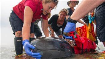 Aquarium de Vancouver : la jeune fausse orque 14071110