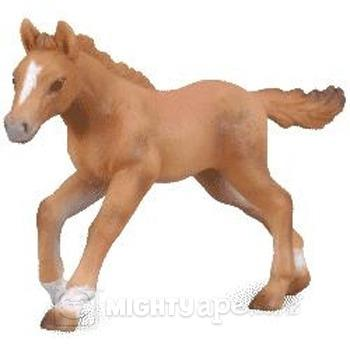 Walkaround of the 2011 Mojo Fun Hanoverian Foal 92018010