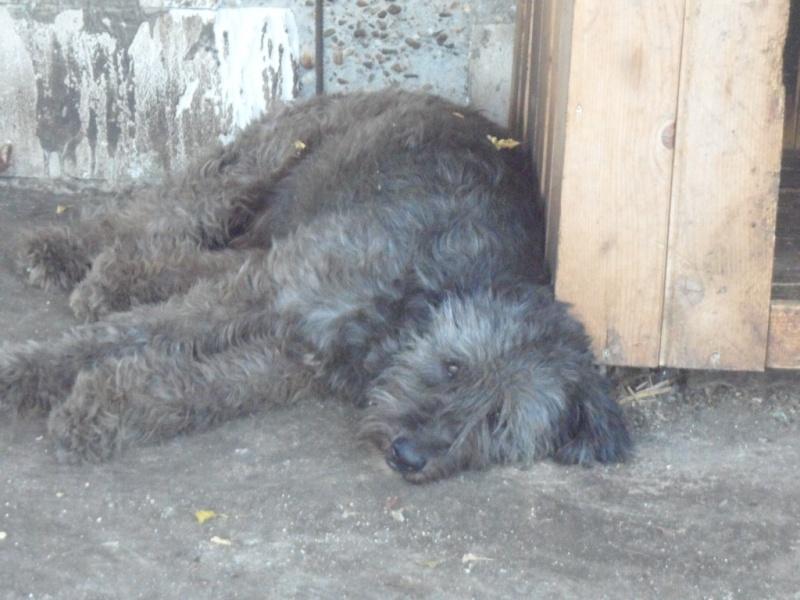 SOS pour Clody... male de 3 ans dans un refuge de misère... 15_11910