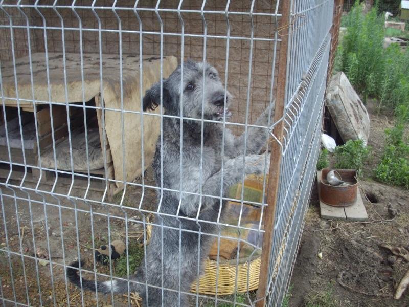 SOS pour Clody... male de 3 ans dans un refuge de misère... Poze_210