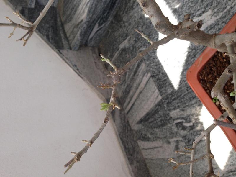 Ulivo con foglie marroni e quasi secche - Pagina 2 Img_0910