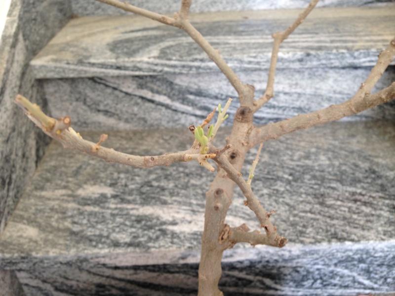Ulivo con foglie marroni e quasi secche - Pagina 2 Img_0913