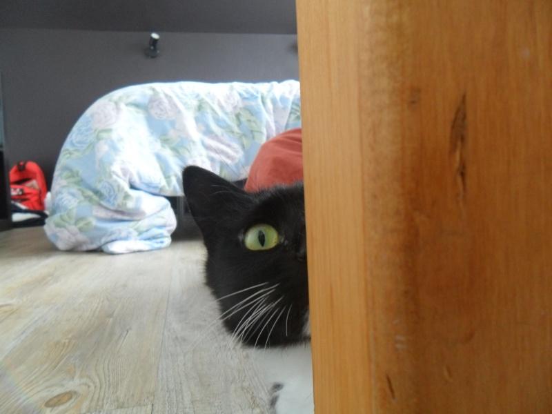 GRATOUILLE, chatte poil mi-long noire et blanche d'un an.  - Page 1 Sam_1112