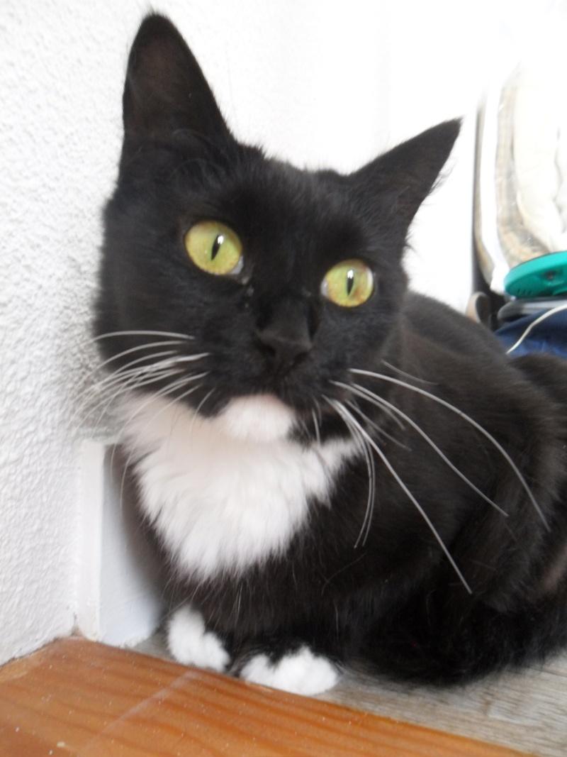 GRATOUILLE, chatte poil mi-long noire et blanche d'un an.  - Page 1 Sam_1115