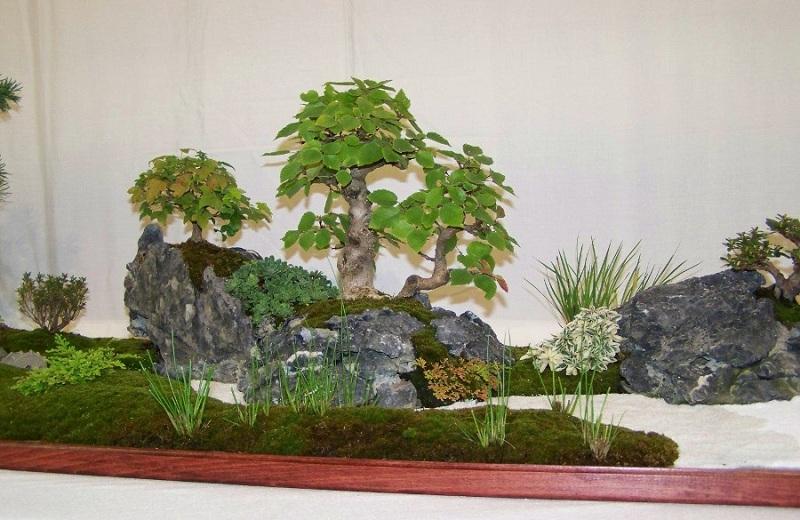 Tray landscape (giant saikei) Bon1-311
