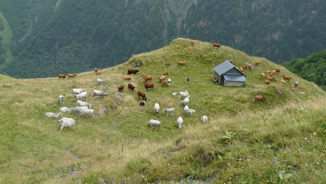 Site naturel energetiquement remarquable  -  pas de Couret d'Esquierry (2131 m) - Pyrénées P1070713